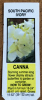 Canna Lily South Pacific Ivory