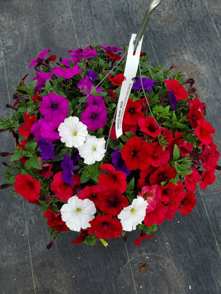 Petunias Frosted Berry Wave Mix