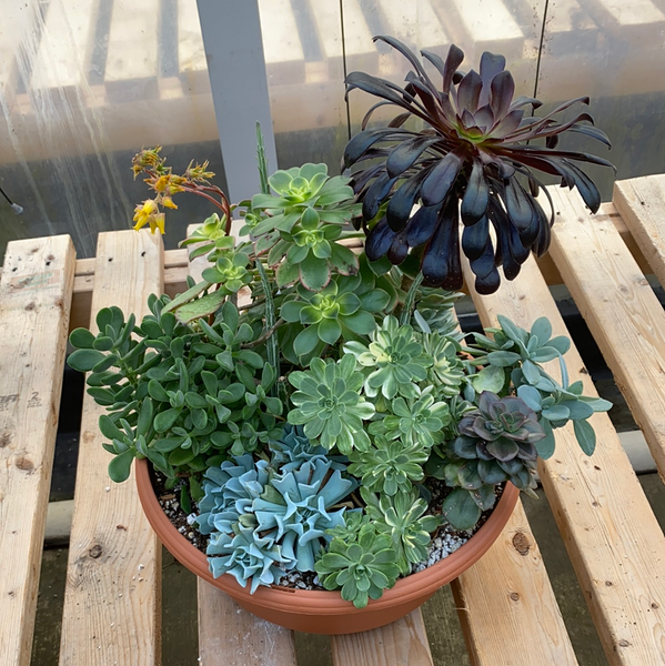 Mixed Tender Succulent Bowl