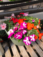 Seed Impatiens Mix