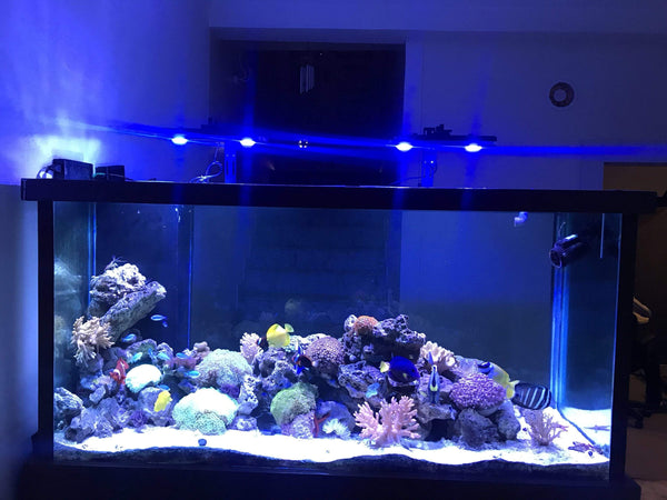 Pixie 150 - LED Aquarium Lighting - Lumini Aqua System - PetStore.ae