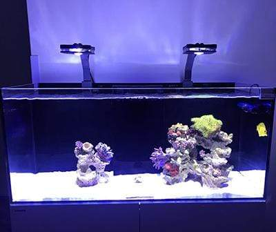 Pixie 80 - LED Aquarium Lighting - Lumini Aqua System - PetStore.ae