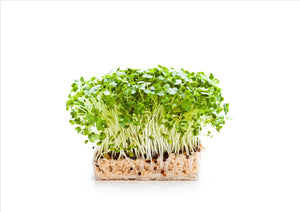 Salad Cress (Punnet)