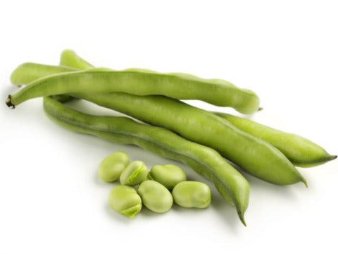Fava (Broad) Bean