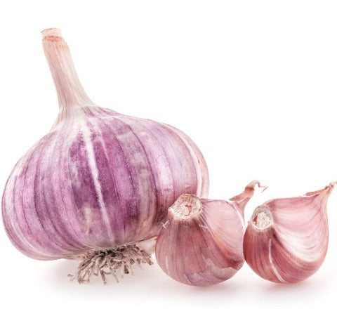 Garlic Whole Purple