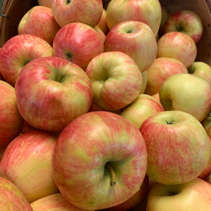 Apples- Honeycrisp