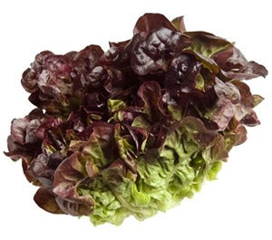OAKLEAF LETTUCE UNIT - DeGusta Grocery Home Delivery