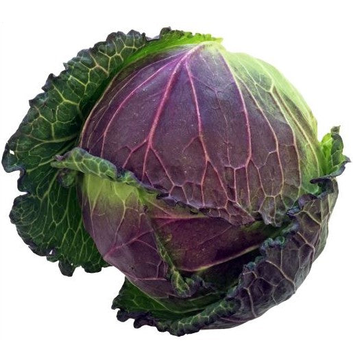 JANUARY KING CABBAGE UNIT - DeGusta Grocery Home Delivery