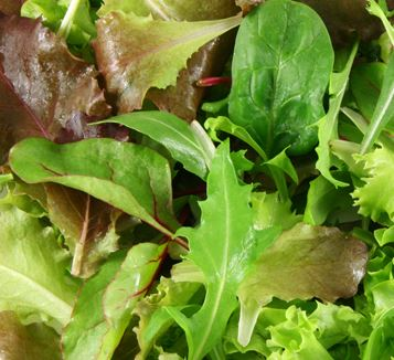 SMALL BABY LEAF SALAD 125g
