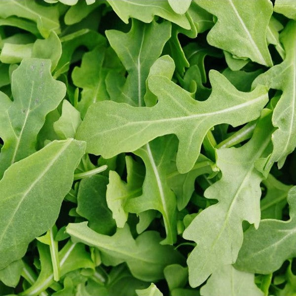 ROQUETTE (ROCKET SALAD) 500g - DeGusta Grocery Home Delivery