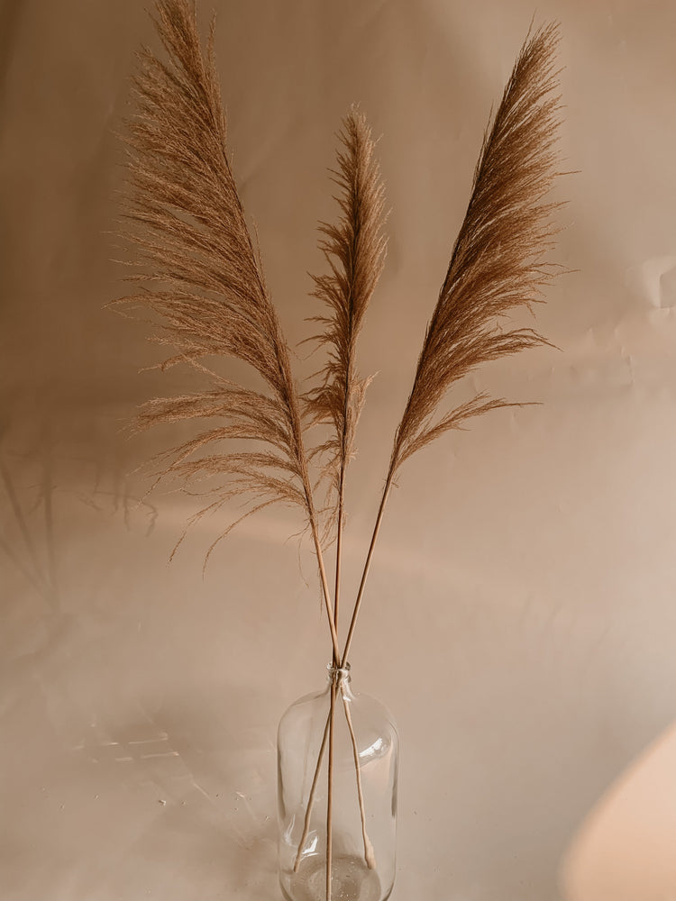 Sonoma Pampas Grass - Golden August