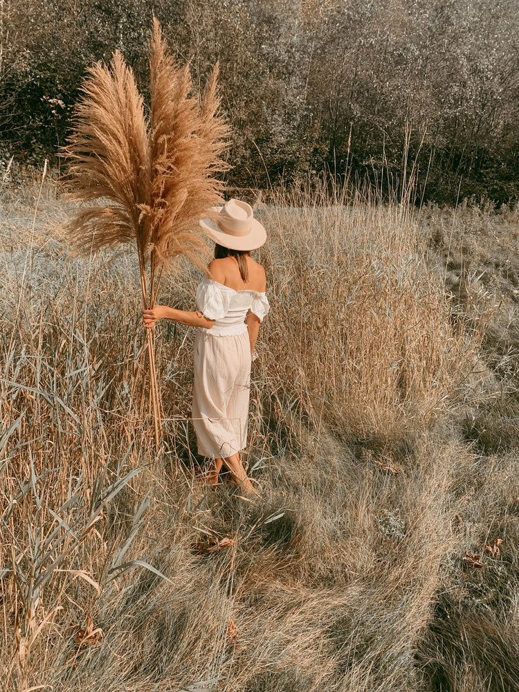 Load image into Gallery viewer, Sonoma Pampas Grass - Golden August