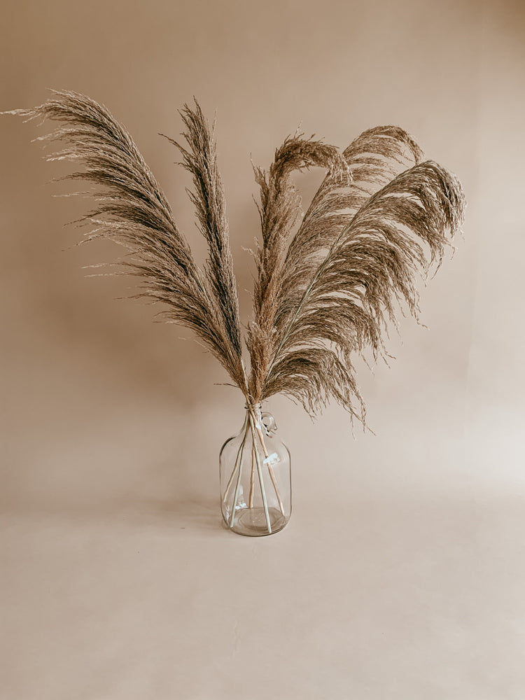 Desert Pampas Grass - Golden August