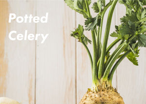 Potted Celery
