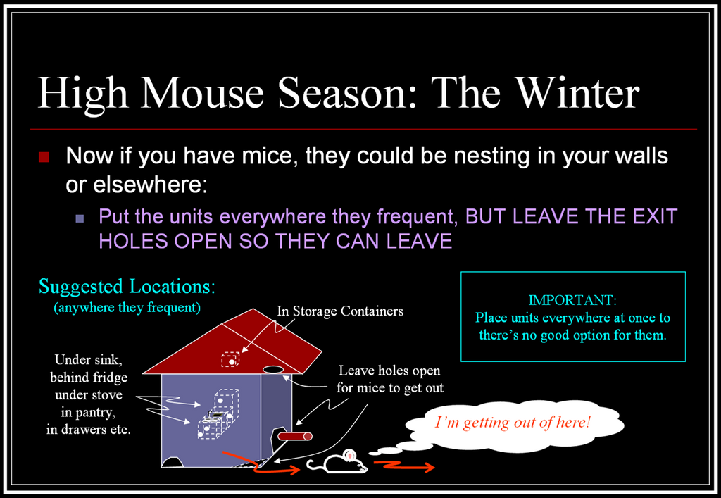 No Mouse in the House Long Lasting All Natural Mouse Repellent Peppermint Oil Mouse Ball Winter Strategy