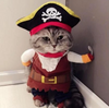 I hate pirates (even the cute ones)
