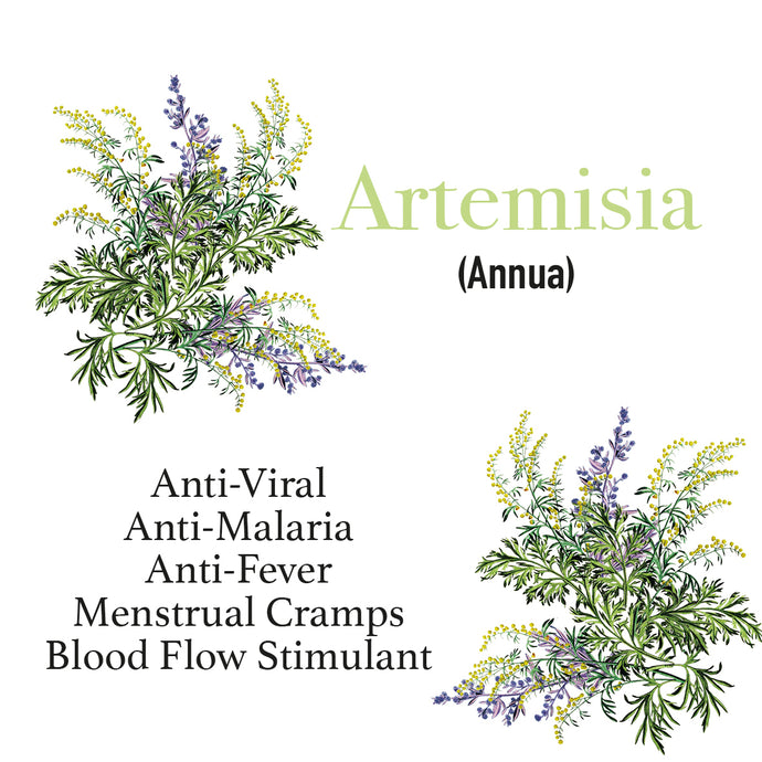 Artemisia Annua, the Antiviral Superpower Plant