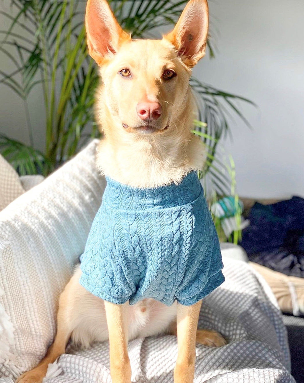 Dog Jumper - Teal Cable
