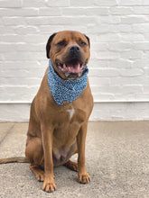 Load image into Gallery viewer, Dog Bandana - Teal Spot
