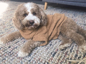Dog Jumper - Teddy Fleece Latte
