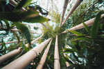 Be Bamboozled by Bamboo Sustainability! Why Bamboo Products Are So Good For The Environment