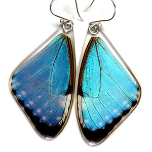 Blue Morpho Portis Earrings