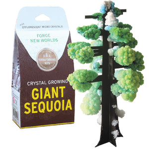 Crystal Growing Giant Sequoia Kit