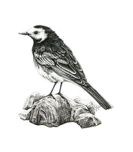 Load image into Gallery viewer, 'Pied Wagtail' card