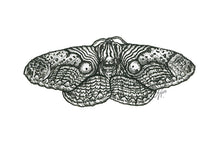 Load image into Gallery viewer, 'Indonesian Owl Moth' original art