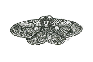 'Indonesian Owl Moth' original art