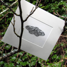 Load image into Gallery viewer, 'Indonesian Owl Moth' Giclée print
