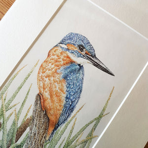 'Kingfisher in the Reeds' Giclée print