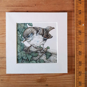 'Sparrow and Ivy' Giclée print