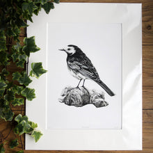 Load image into Gallery viewer, 'Pied Wagtail' Giclée print