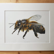Load image into Gallery viewer, 'Cornish Black Bee' Giclée print