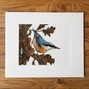 'Nuthatch and Oak' Giclée print