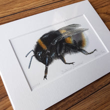 Load image into Gallery viewer, 'Buff-tailed Bumblebee' Giclée print