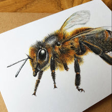 Load image into Gallery viewer, 'Cornish Black Bee' card