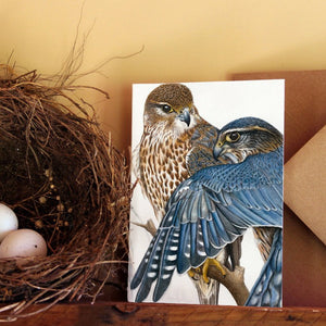 'Merlin Falcons' card