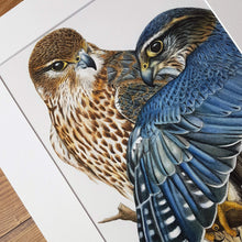 Load image into Gallery viewer, 'Merlin Falcons' Giclée print