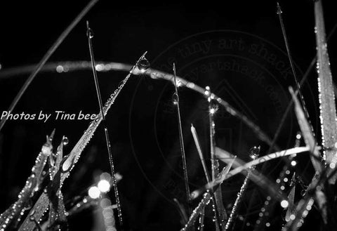 Photos by Tina Bee - Morning Dew on Grass