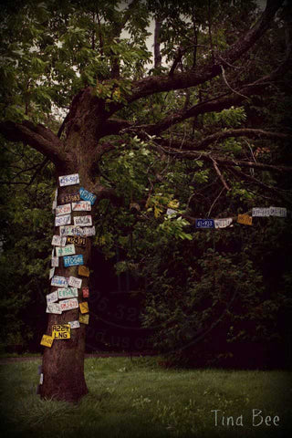 Photos by Tina Bee - License Plate Tree