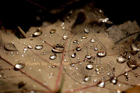 Photos by Tina Bee - Raindrops on Leaf