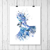 Whitehouse Art - Blue Jay Colourful Watercolour