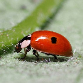Beneficial Insects & Mites