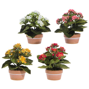 "7.5"" Potted Kalanchoe Floral Decor – 4 Assorted"