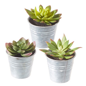 "3.25"" Potted Succulent – 3 Assorted"