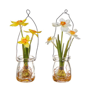 "7.25"" Daffodil in Jar – 2 Assorted"