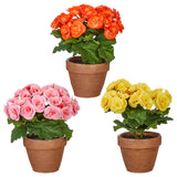 "10.5"" Potted Begonia - 3 Colors - Sold Separately"