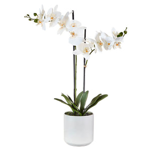 "28.5"" Real Touch Potted Orchid"